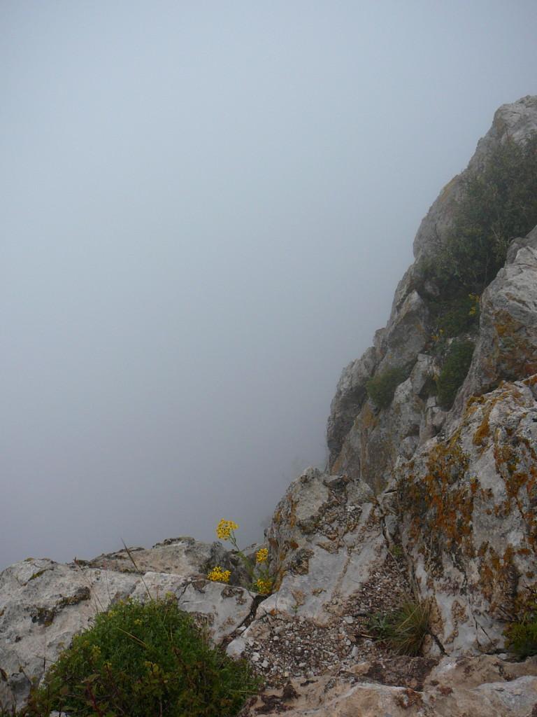 La Luz Trail - Foggy